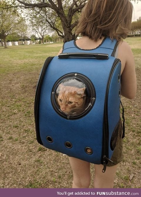 A cat backpack at the park