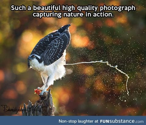 Capturing nature in action