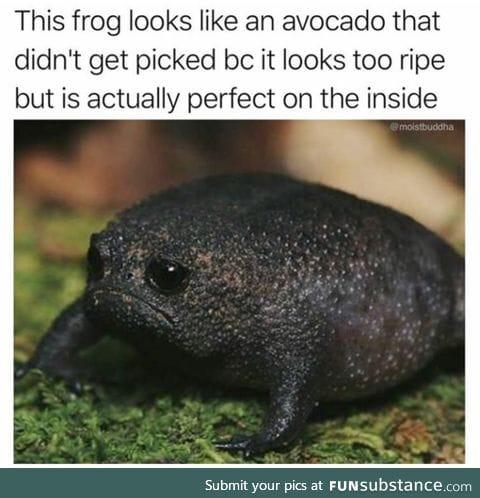 Avocado looking frog
