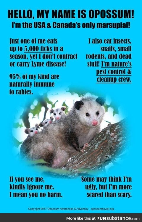 Opossums are friends