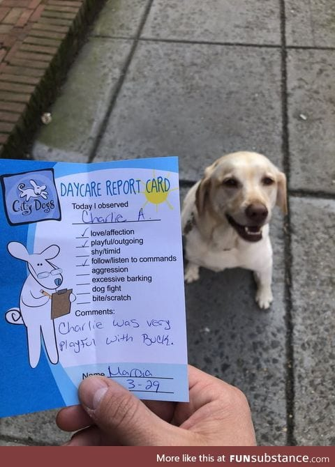 Charlie's report card
