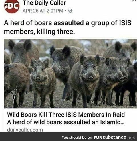 New ISIS killer