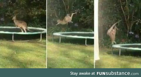 Pretty sure this was his first time on a trampoline