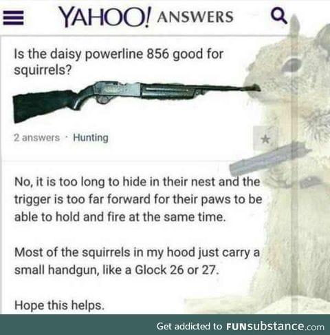 Squirrel safety