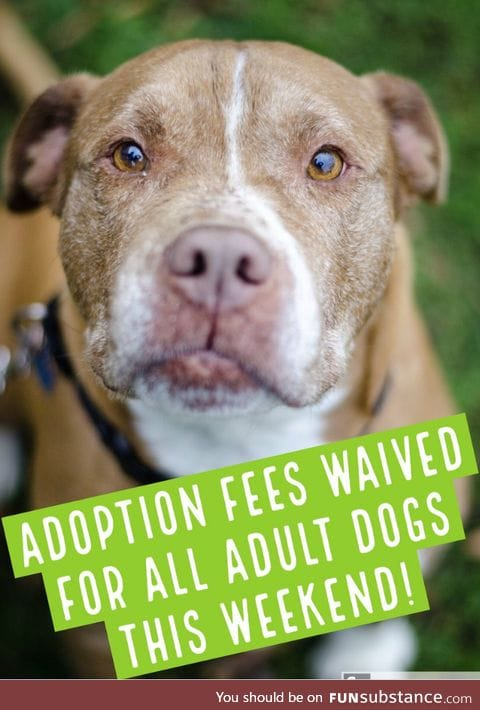 ADOPTION FEES WAIVED FOR ALL DOGS ONE YEAR AND OLDER THIS WEEKEND!  AWLArlington, VA