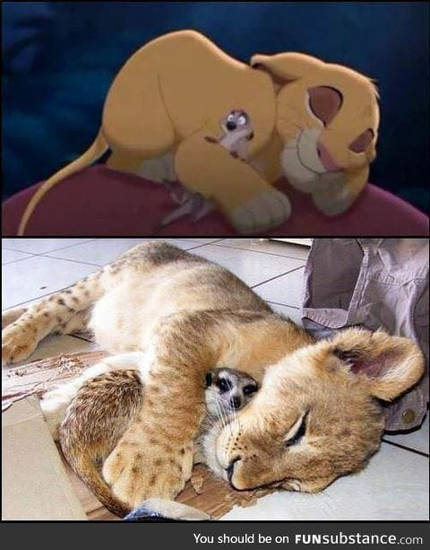 The real inspiration to make Lion King