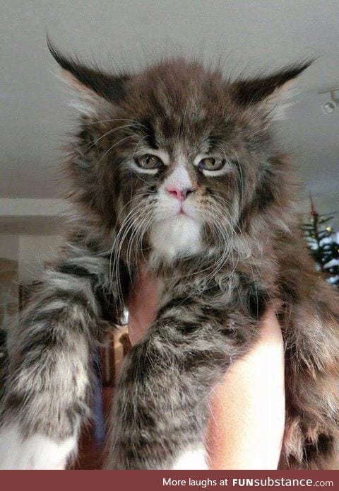 This Is The Coolest Looking Cat I've Ever Seen