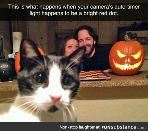 Cat: Wait, let me clear the shot first.