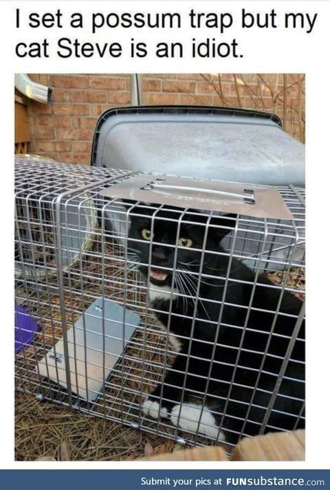 Maybe Steve likes possum traps