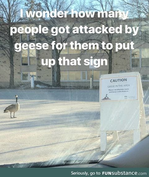 These geese don't play