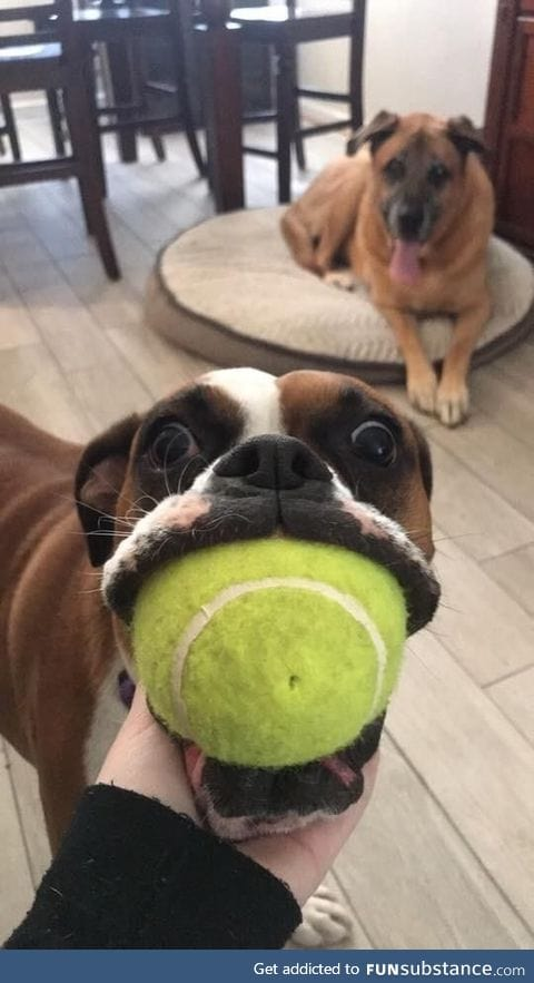 Look, I got the ball in my mouf!!!