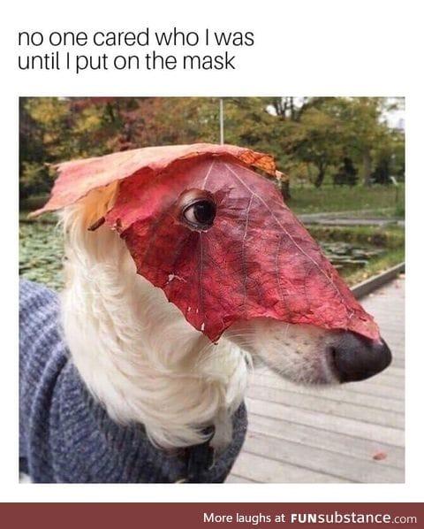 Masked doggo