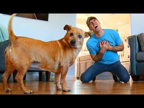 Faking your death in front of your dog