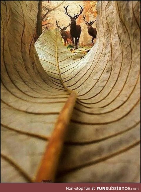 A view from a leaf-/