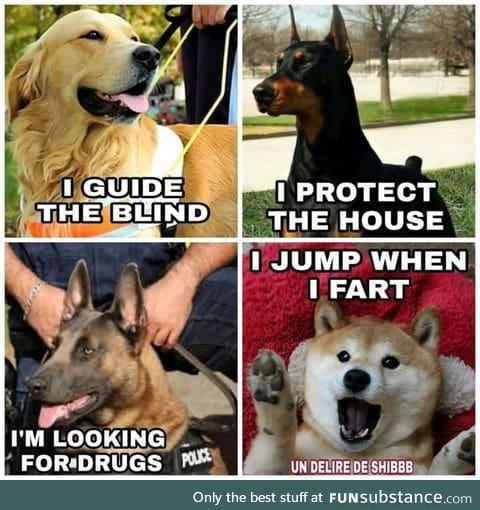Doge beeing Doge