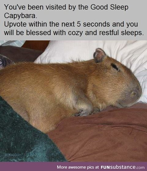 A Capybara just for you!