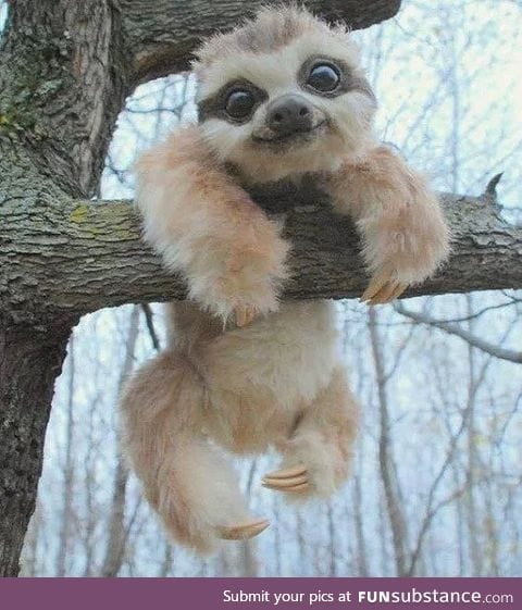 Be more Sloth-like