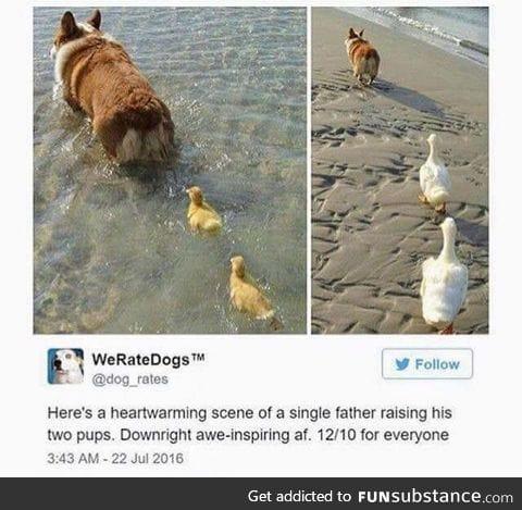 Love doggos