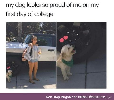 Doggo is proud of owner