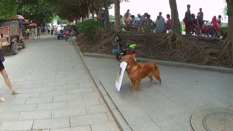Chinese business owner trained dog to walk around with a sign advertising his burger joint