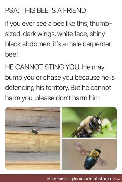 Harmless bee