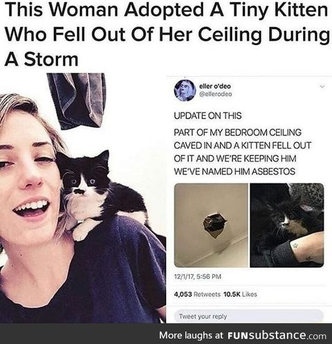 This woman adopted a tiny kitten who fell out of her ceiling during a storm