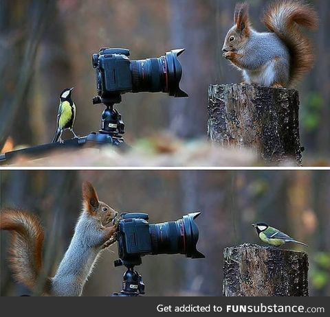 Russian Photographer Captures The Cutest Squirrel Photo Session Ever photo by Vadim Trunov