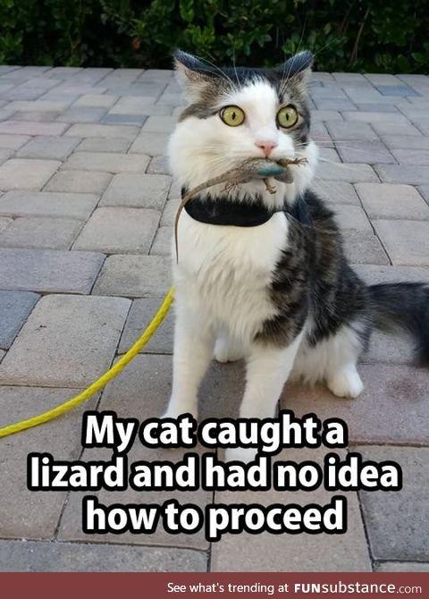 Cat caught a lizard