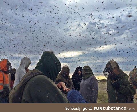 Mosquitos in Alaska