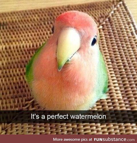 Do you wanna eat watermelon?