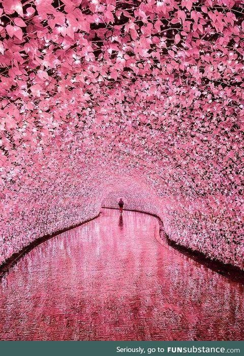 Illuminated tunnel in Mei, Japan