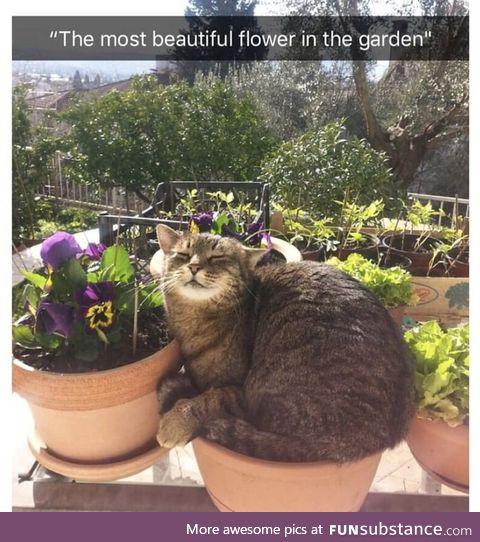 That's a weird looking flower