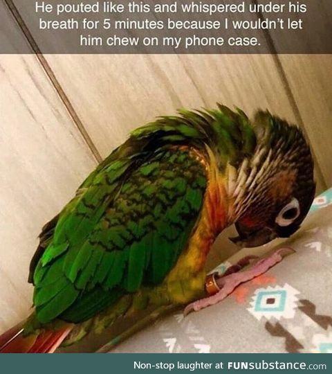 Spoiled bird