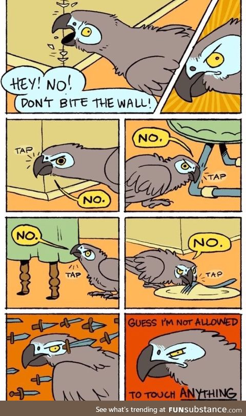 This is exactly how pet birds are