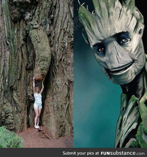 """""""Touch my groot"""""""