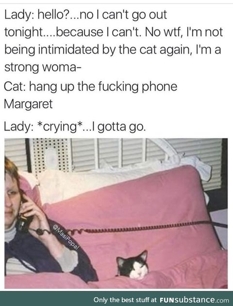 But it's a cat though