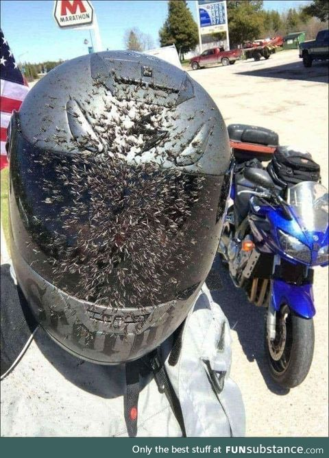 When you run into a cloud of mosquitos at 80mph