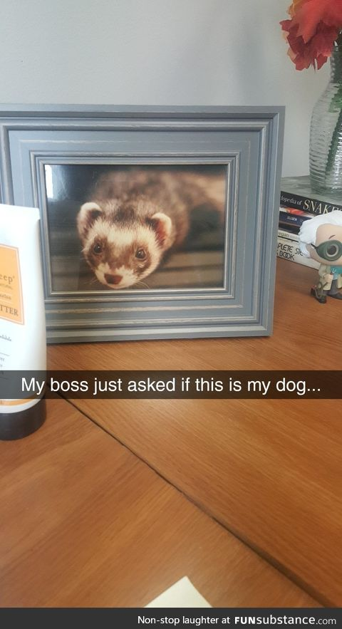 It's a ferret, if you're confused.