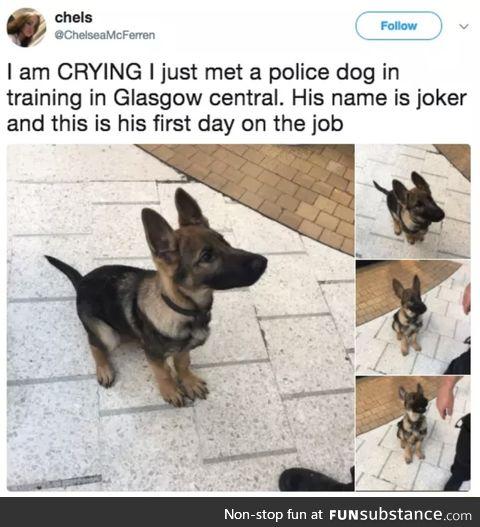 Joker the police dog
