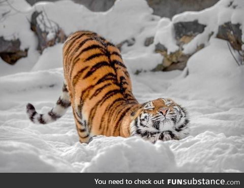 Big kitty in the snow
