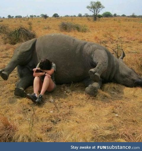 A nature reserve worker weeping beside a poached rhino