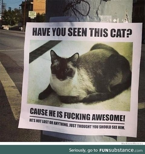 Have you seen this cat?