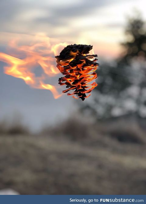 A pinecone on fire