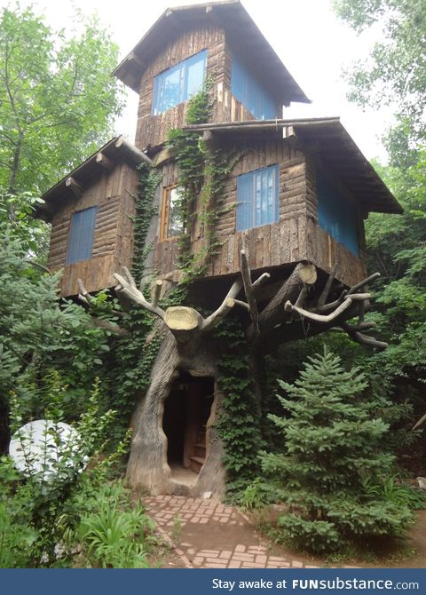 3 story tree house in the woods