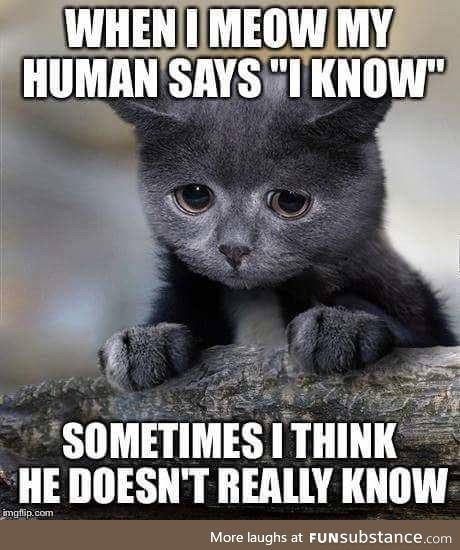 Confession kitty