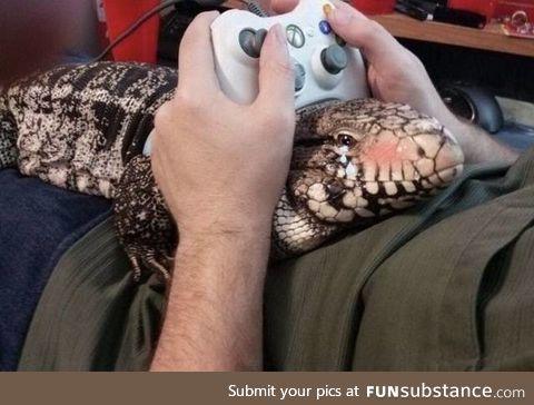 Lizard boy doing his best r e l a x