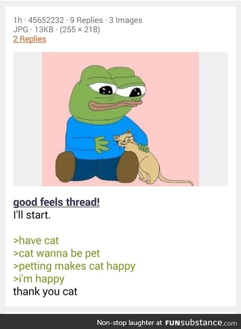 Anon has a cat