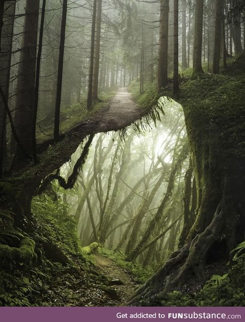 Underforest - I'm high or what!