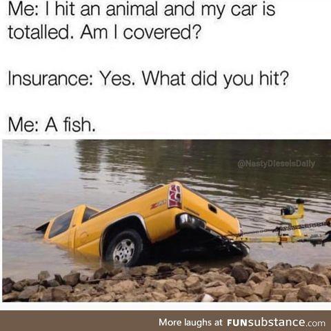 Hit an animal