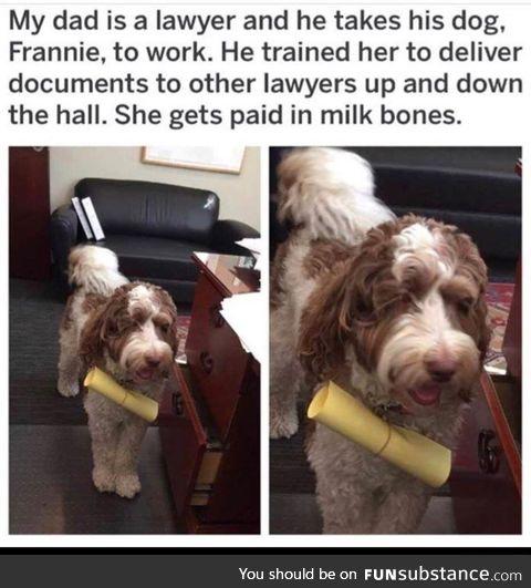 A dog labor